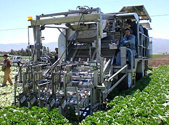 lettuce harvester