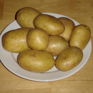Kartoffeln_der_Sorte_Marabel